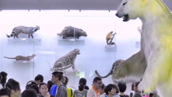 北京自然博物馆 | 快乐科普亲子行,流连忘返~。-旅游互动聚合社区