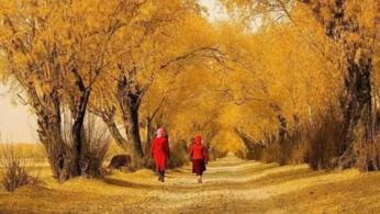 去一次南疆怎么够?不到南疆,不知新疆的景色有多美!。-旅游互动聚合社区